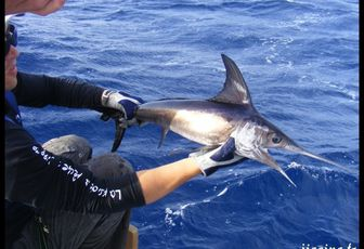 LES ANIMAUX MARINS