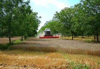 L'agroforesterie replante les arbres au milieu des cultures
