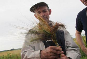 Agriculteur de 83 ans, il préserve 200 variétés de blés anciens pour préparer le retour à une agriculture respectueuse et durable