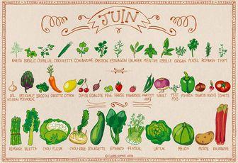 Calendrier des fruits et légumes - juin