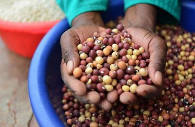 {Business} Foreign Interests Seek Control Over African Seed Reserves