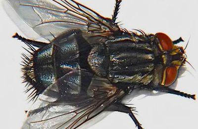 Jeu de détente: attrapes les mouches