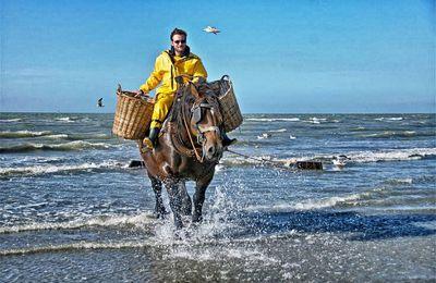 Fiandre, viaggio nel paese dove si pesca a cavallo