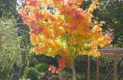 L'automne est la !