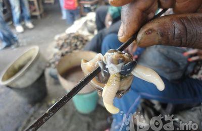 Cameroun. Pourquoi l'élevage des escargots peine à décoller ?