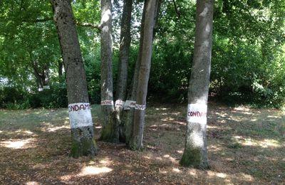Les arbres, la MCB et l'hystérie des réseaux ...