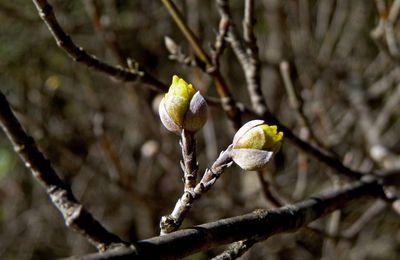 Des bourgeons floraux prometteurs