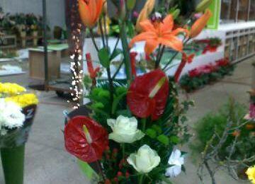 compositions fleurs coupaient et plantes d'intérieur