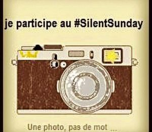 Silent Day #56