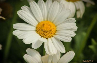 Photo : Flower Power