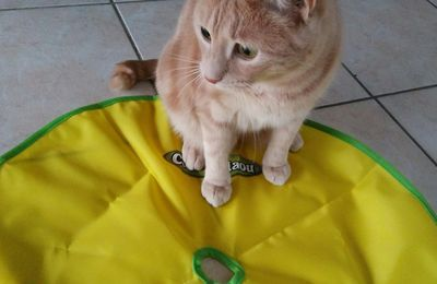 Oliver a testé le jeu Cat's Miaou !