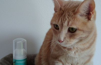 Oliver a testé l'Essential Mousse Dermoscent