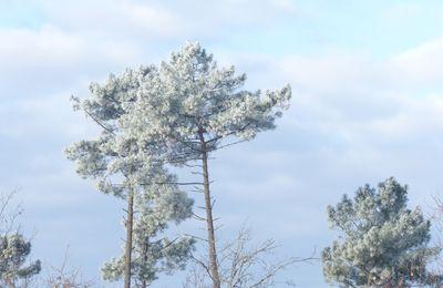 Un froid plus intense dans les stations landaises : l'effet de clairière sableuse