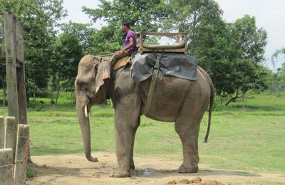 Chitwan: Elephant riding