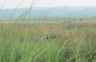 Chitwan: Walk into the jungle