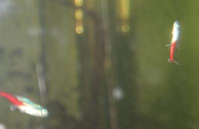 Un poisson peut-il être aliéné mental ?