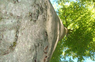 La forêt de Bord, son histoire, son intérêt touristique