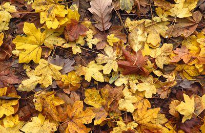Hommage aux feuilles mortes ..