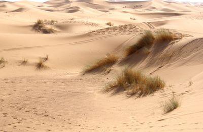 Vers les dunes de Merzouga