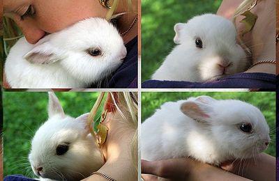 Une souris parmi les lapins