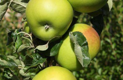 Pommes, pommes, pommes, pommes....