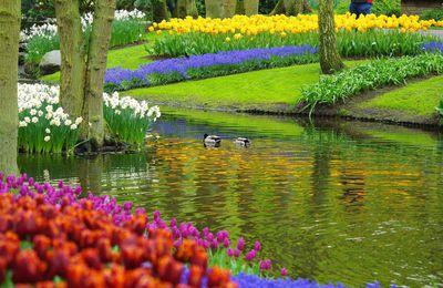 Les Pays Bas 05-2010
