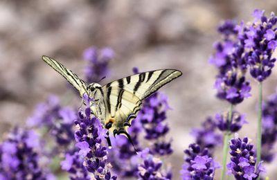 Insectes - Usseau en 2017