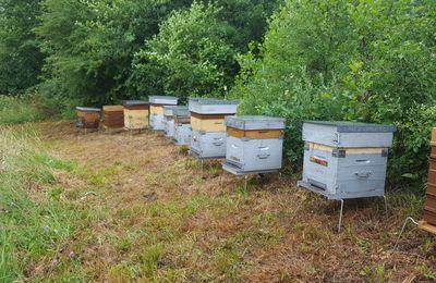 si les ruchers m'étaient ....Comté .