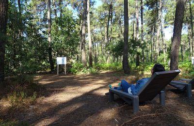 La forêt de Boudré : le poumon vert du territoire
