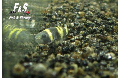 Bee Movie, une drôle d'abeille dans les bacs...