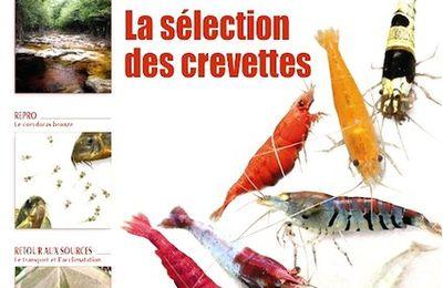 Aquamag n°20 : un focus sur la sélection des crevettes