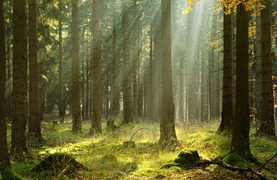 Faudrait quand même pas que la nouvelle perception sociale du bois nuise à la sylviculture!