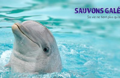 URGENCE: SAUVONS LE DAUPHIN GALEO