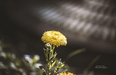 C'est la pluie qui fait grandir les fleurs...Rûmi