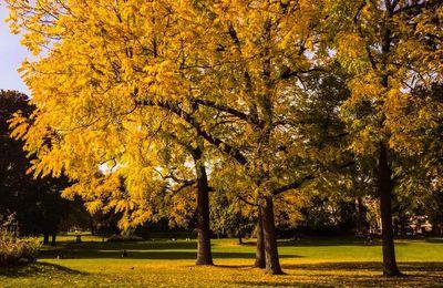 Par les fenêtres de l'automne...