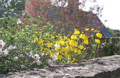 Flore de vacances : Estivals
