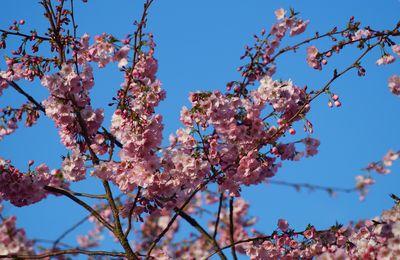 Je crois que le printemps est là....