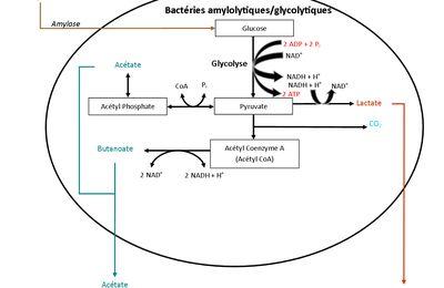 De l'équilibre de l'intestin : l'acidité (Partie 2)
