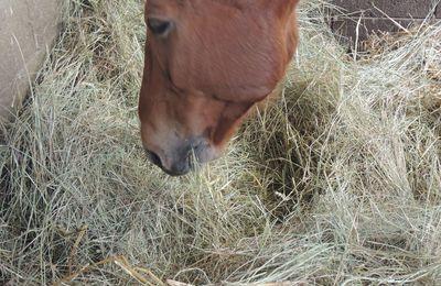 Une journée d'initiation à la Nutrition Equine dans votre région