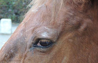 Etre aux petits soins pour son cheval âgé. 1 soigner le moral