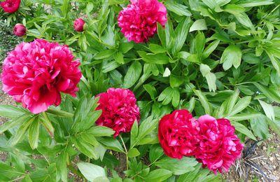 Le Jardin mi- Avril ,mi-Mai !!