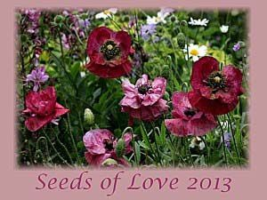 Seeds of love : Résultats !