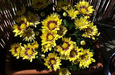 Quelques fleurs.