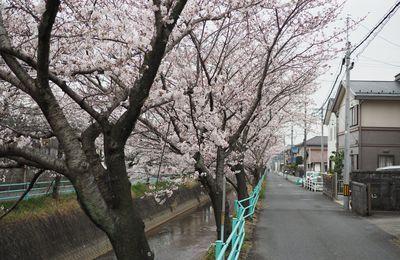 12 jours au Japon Partie 1