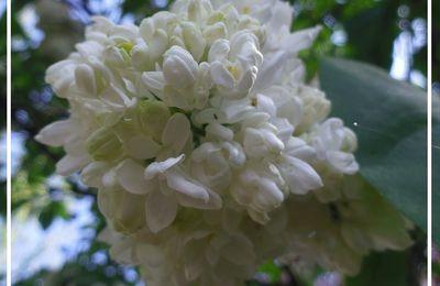 Fleurs de printemps... tardif