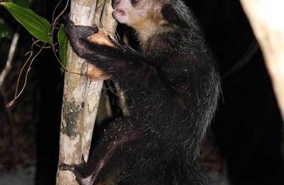 Chroniques malgaches (14) : Rencontre avec une créature de la nuit...