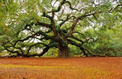 """Défi n° 49 Thème """" l'arbre """""""