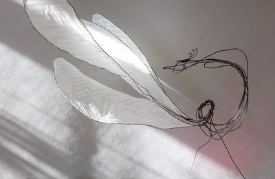 Phoenix    h :  57 cm