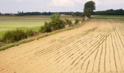 L'Etat fait un premier pas pour venir en aide aux agriculteurs sinistrés par la sécheresse