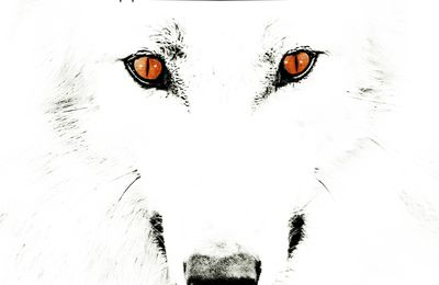 "CD review WOLFPAKK ""Rise of the animal"""